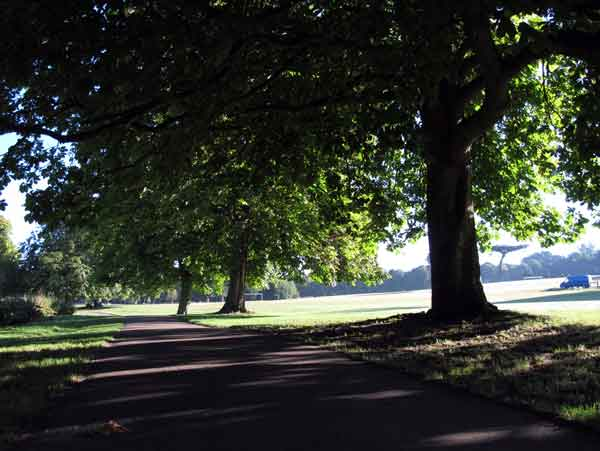 Cassiobury Park trees in sunshine