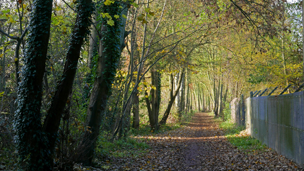 Near Cassiobury, Watford